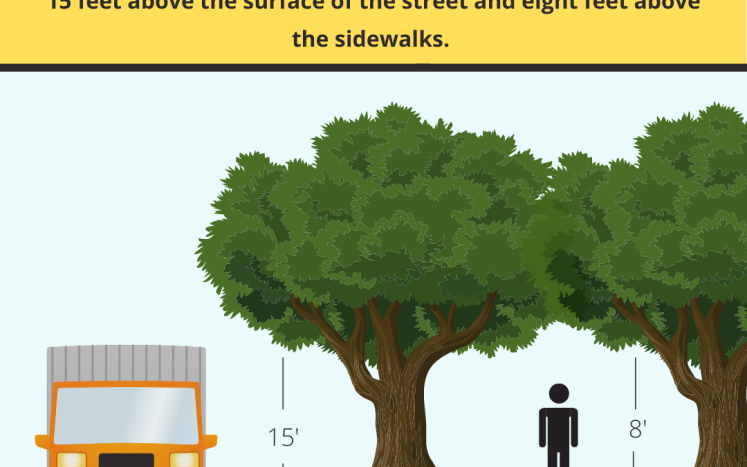 Tree Trimming Requirements
